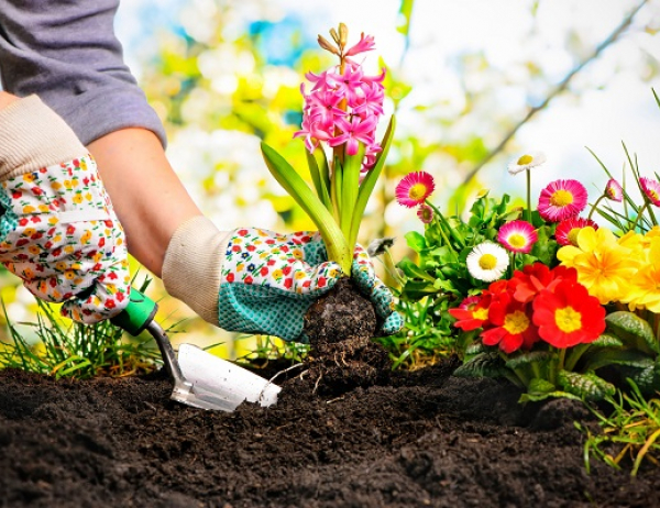 Go to Grow Plants Not Pains: The Physiotherapy Clinic's Guide to Gardening